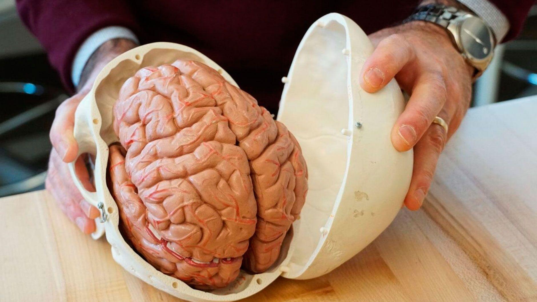 İnsanın 3 beyni var, onlar birlikdə işləyir   - Neyrobiologiyada SENSASİYA
