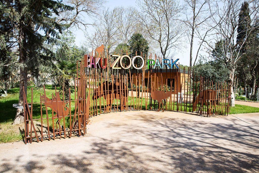 Bakı zooparkında COVID-19 pasportu tələb olunacaq? -  Açıqlama