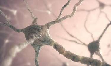 Tibbdə inqilabi kəşf - İlk dəfə yeni beyin hüceyrəsinin yaranmasını görə bildilər/ VİDEO