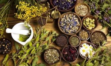 Ən güclü antiviral təsirə malik bitkilər